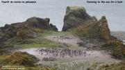 Pygoscelis_adeliae.189.King-George-Is.South-Shetland-Islands.Antarctica.20.01.2019
