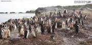Pygoscelis antarcticus094.King George Is.South Shetland Islands.Antarctica.31.01.2019