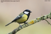174.039.Parus_major001.Janowek.MJ.21.12.2013